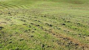 Mown Grass in Park Stock Photos