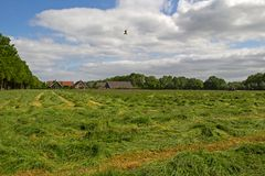 Mown grassland Royalty Free Stock Photography
