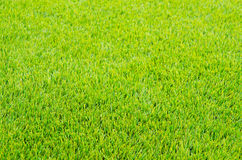 Mown green grass Stock Photo
