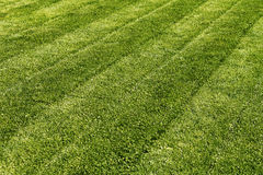 Mown green grass Royalty Free Stock Photography