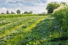 Mown hay Royalty Free Stock Photography