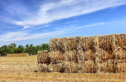 Mown hay harvested in large briquettes on the field Royalty Free Stock Photos