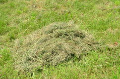 Mown hay Stock Images