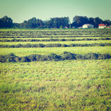 Mown Hay Royalty Free Stock Images