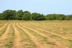 Mown hayfield on a summer day. In the middle  of a mown hayfield on a hot summer day Royalty Free Stock Image