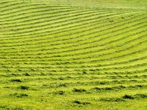 Mown lawn with lines  1. Mown grass with long lines Stock Images