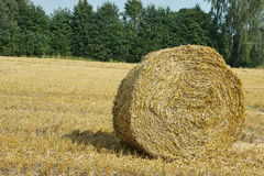 Mown meadow hay roll Royalty Free Stock Photo