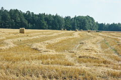 Mown meadow hay roll Royalty Free Stock Photos