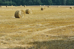 Mown meadow hay roll Royalty Free Stock Image