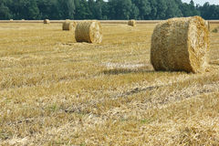 Mown meadow hay roll Stock Image