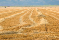 Mown wheat Royalty Free Stock Photos