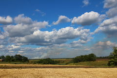 Mown wheat field. Royalty Free Stock Photos