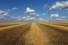 Mown wheat field. Royalty Free Stock Photography
