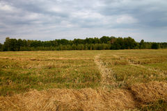 Mown wheat field and sky with thunder clouds Stock Images