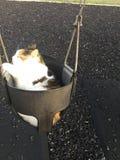 Moxy vår katt Arkivbilder