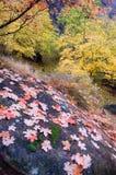 mozaika liści, Fotografia Royalty Free