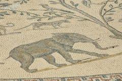 Mozaika z słoniem w Volubilis, Maroko Obraz Stock