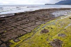 Mozaikowy bruk - Tasmania zdjęcia royalty free