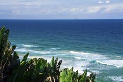 Mozambique beach 2. Gorgeous, lush Beach in Mozambique Royalty Free Stock Photo