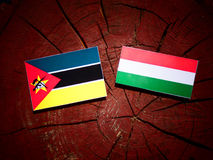 Mozambique flag with Hungarian flag on a tree stump isolated. Mozambique flag with Hungarian flag on a tree stump Stock Images