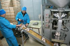MOZYR,白俄罗斯- 2011年9月22日:肉食品处理植物 处理猪肉和牛肉 机器、机制和设备 免版税库存照片