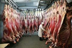 MOZYR BIAŁORUŚ, Wrzesień, - 22, 2011: Mięsny zakład przetwórczy Przetwarzać wieprzowina i wołowina Maszyny, mechanizmy i wyposaże Fotografia Stock