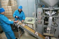 MOZYR, BIELORUSSIA - 22 settembre 2011: La pianta di lavorazione della carne Elaborazione della carne di maiale e del manzo Macch Fotografia Stock Libera da Diritti