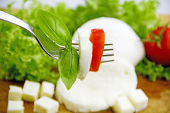 Mozzarella. Cheese on cutting board with lettuce and tomato Stock Image