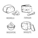 Mozzarella cheese and parmesan, mimolette sketches. Set of isolated italian mozzarella and porous parmesan, delicious mascarpone and chunk of mimolette. Sketches Royalty Free Stock Image