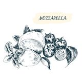 Mozzarella. Hand drawn illustration. Grahpic still life Royalty Free Stock Images
