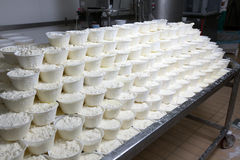 Mozzarella Provola Ricotta Fabrik Lizenzfreie Stockfotografie