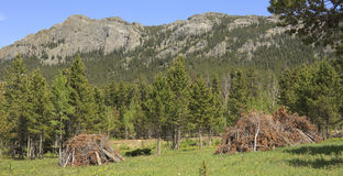 MPB forest clearance Royalty Free Stock Photo