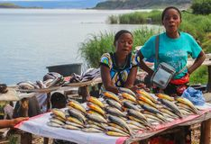 African women sell fresh fish on the counter of the street market royalty free stock images