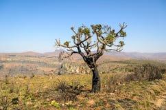 Mpumalanga-Region, Südafrika Stockbild