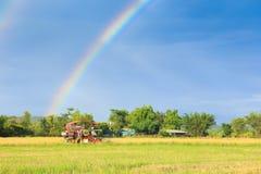 Máquina segador del arroz que trabaja en el campo con el fondo del cielo del arco iris Imágenes de archivo libres de regalías