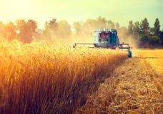 Máquina segadora que cosecha el campo de trigo Imagen de archivo libre de regalías