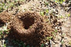 Mrówki wzgórze z bańczastym rożkiem składa się ziemi i piaska głębienie od ziemi zdjęcia royalty free