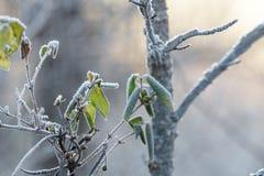 Mróz na zielonych liściach zdjęcia stock