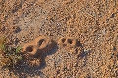 Mrówek gniazdeczka Fotografia Stock