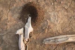 mrówka Obraz Royalty Free