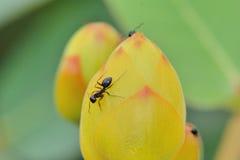 mrówka Zdjęcia Royalty Free