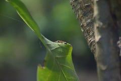 mrówka Obraz Stock