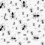 Mrówka Bezszwowy wzór Czarny i biały wektorowy bezszwowy wzór z mrówkami Zwierzęcy tło royalty ilustracja