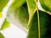 Mrówka gniazduje na drzewie Zdjęcia Royalty Free