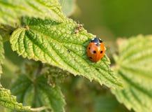 Mrówka i ladybird zdjęcia royalty free