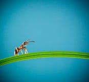 Mrówka i zielona trawa Zdjęcie Royalty Free