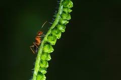 Mrówka, mrówka w naturze Zdjęcia Royalty Free