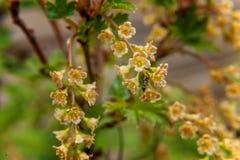 Mrówka na czerwonym rodzynku Kwiat Zdjęcie Royalty Free