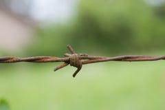 Mrówka na drucie Zdjęcia Stock