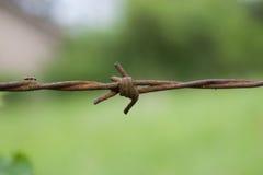 Mrówka na drucie Fotografia Royalty Free